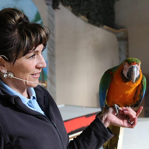 web-Papageienschule